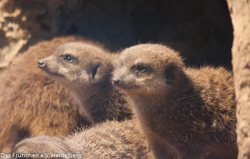 WFT Zoo 2012 – 4